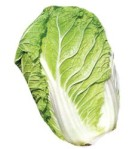 napa_cabbage[1]